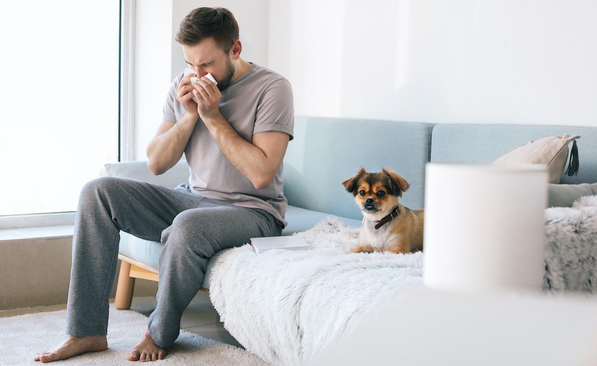 Allergia al cane